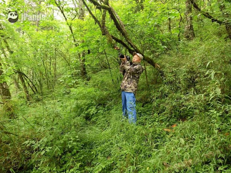 韦华在野外监测