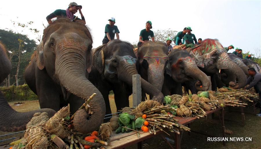 Ежегодный фестиваль слонов в Непале