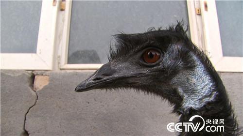 养独特的鸟 赚独一份的钱
