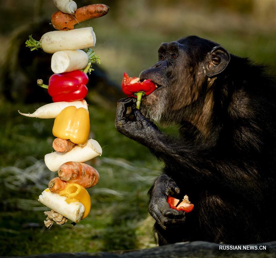 Кушают животные