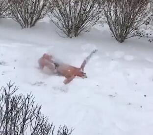 Des nageurs américains font un relais... dans la neige