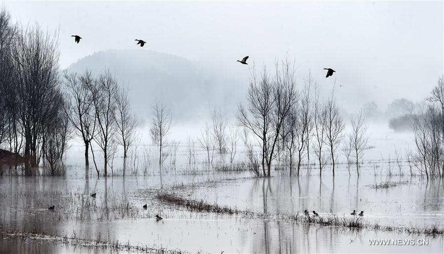 Рост популяции черношейных журавлей в провинции Юньнань