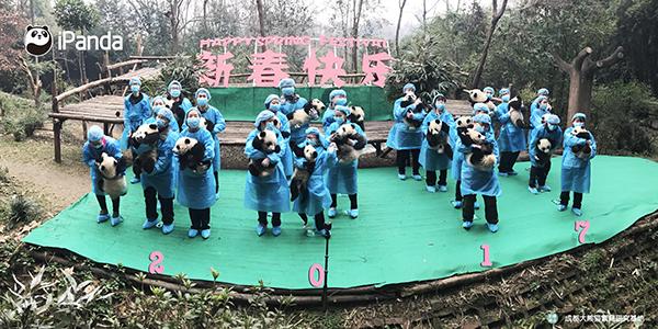 熊猫幼仔和饲养员向全球人民送去新春祝福