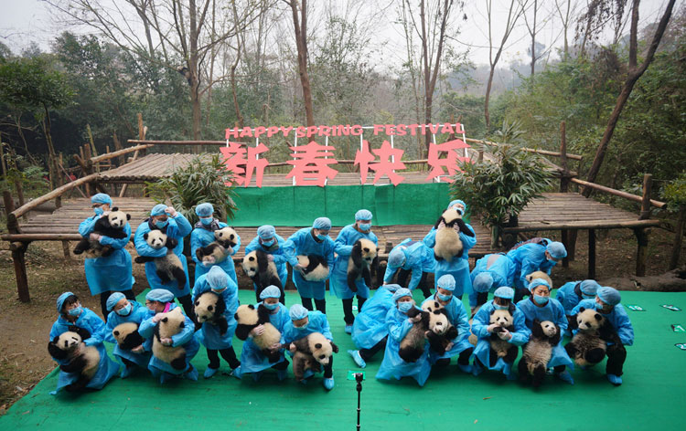 Baby pandas appear in Preliminary Eve group photo
