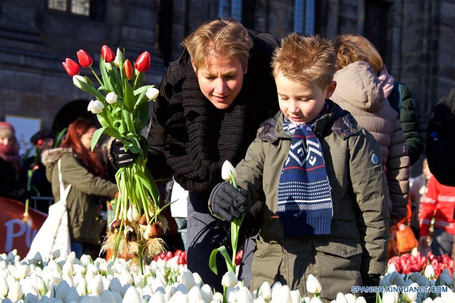 AMSTERDAM, enero 21, 2017 (Xinhua) -- Visitantes recogen tulipanes durante el Día Nacional del Tulipán Holandés 2017 en Amsterdam, Países Bajos, el 21 de enero de 2017. De acuerdo con información de la prensa local, más de 200,000 tulipanes fueron exhibidos en la Plaza Dam de Amsterdam el sábado. Este evento anual conmemora el inicio de la temporada de tulipanes en Países Bajos. (Xinhua/Sylvia Lederer)