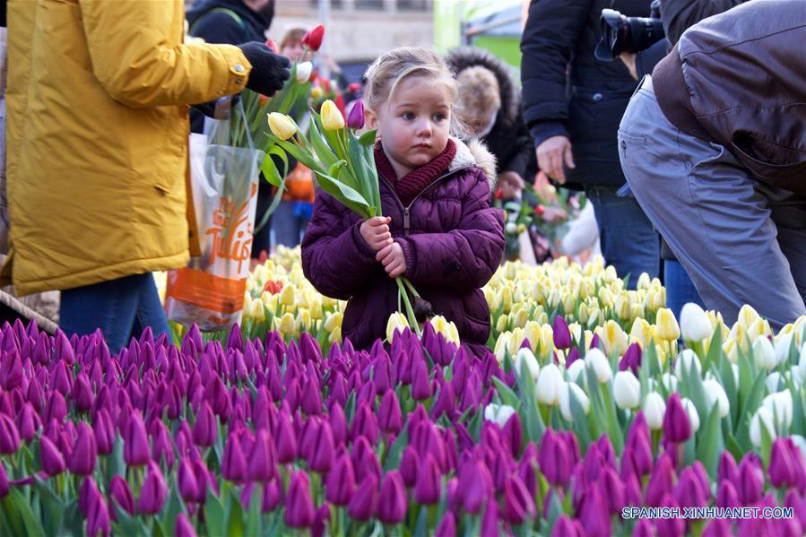 Una niña sostiene tulipanes durante el Día Nacional del Tulipán Holandés 2017 en Amsterdam, Países Bajos, el 21 de enero de 2017. De acuerdo con información de la prensa local, más de 200,000 tulipanes fueron exhibidos en la Plaza Dam de Amsterdam el sábado. Este evento anual conmemora el inicio de la temporada de tulipanes en Países Bajos. (Xinhua/Sylvia Lederer)