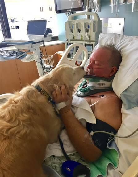 Un chien sauve la vie de son maître bloqué dans la neige pendant 24 heures !