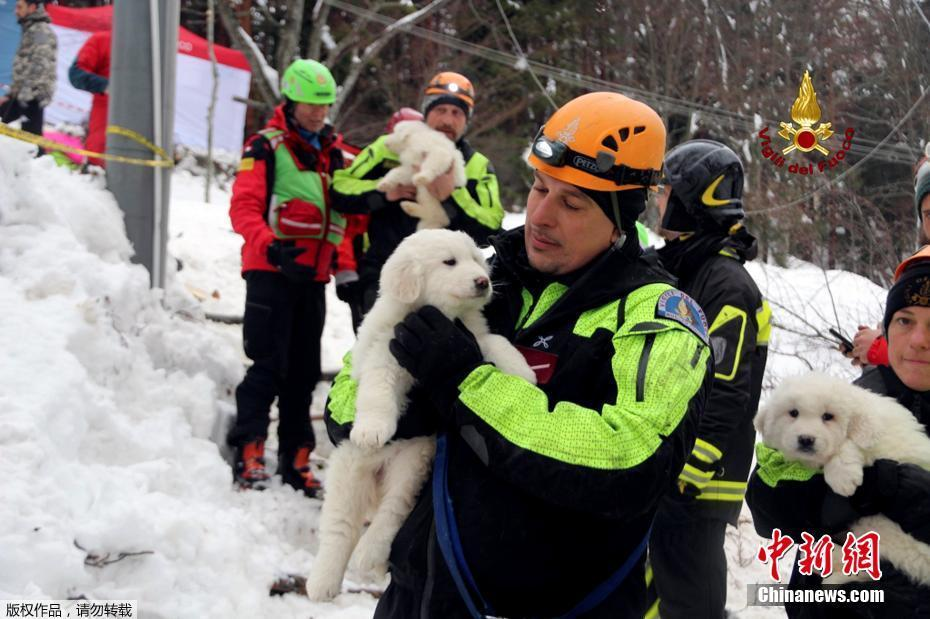 Des secouristes retrouvent des chiots cinq jours après une avalanche