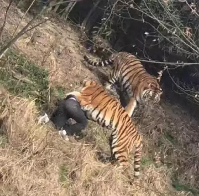 宁波一男子在动物园被老虎咬伤