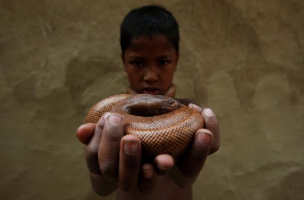 Bienvenue au pays des charmeurs de serpents