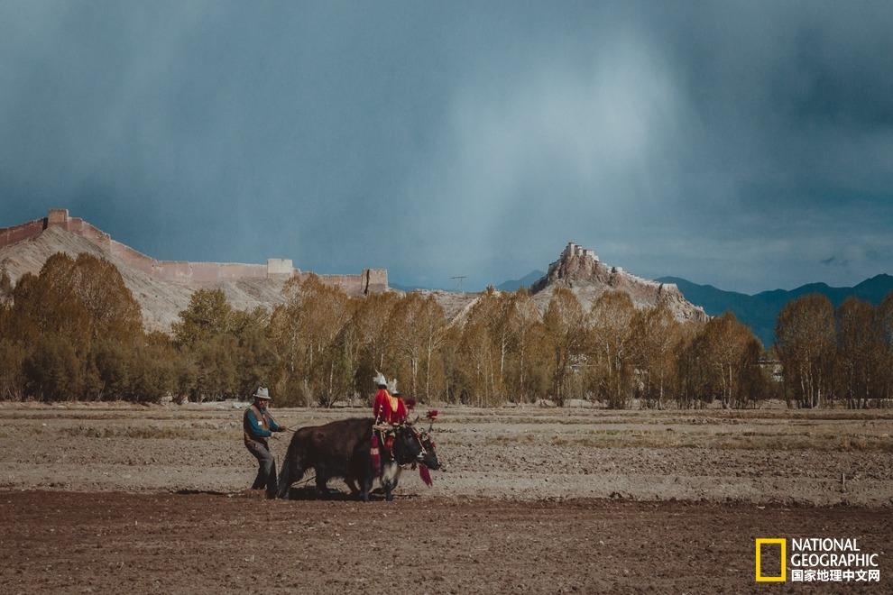 西藏江孜 | 一年到头,只愿回望,你的四季!