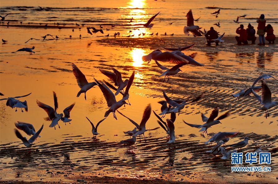 (环境)(1)北戴河初春观鸥舞