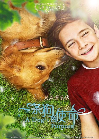 """《一条狗的使命》""""陪伴版""""海报人宠温暖四世情话"""
