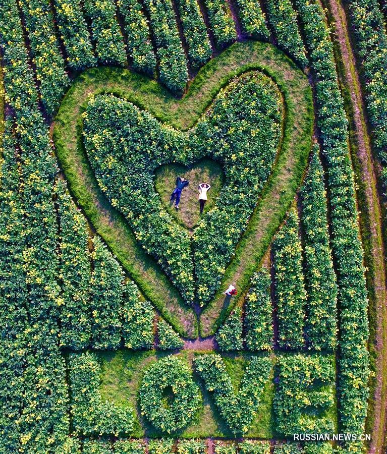 Символ любви среди полей в Гуанси