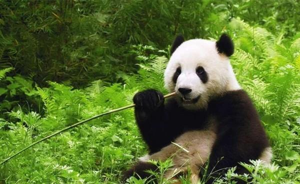 """""""经典伊人手机""""点评:熊猫GM958_通讯与电讯_科技时代_新浪网"""