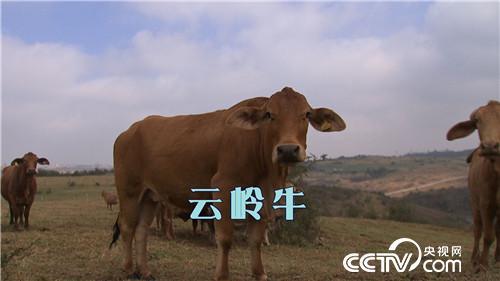 一斤鱼200元 一头牛20万 凭啥 20170221