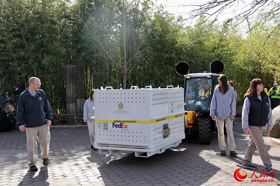 """(2月21日上午,大熊猫""""宝宝""""从熊猫馆内转移至一特制金属集装箱内,准备运往华盛顿杜勒斯国际机场。摄影:陈丽丹)"""