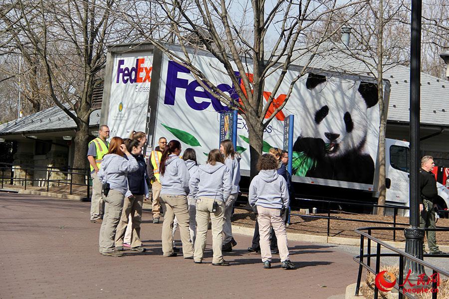 """(2月21日,华盛顿国家动物园的工作人员向""""宝宝""""做最后道别。摄影:陈丽丹)"""