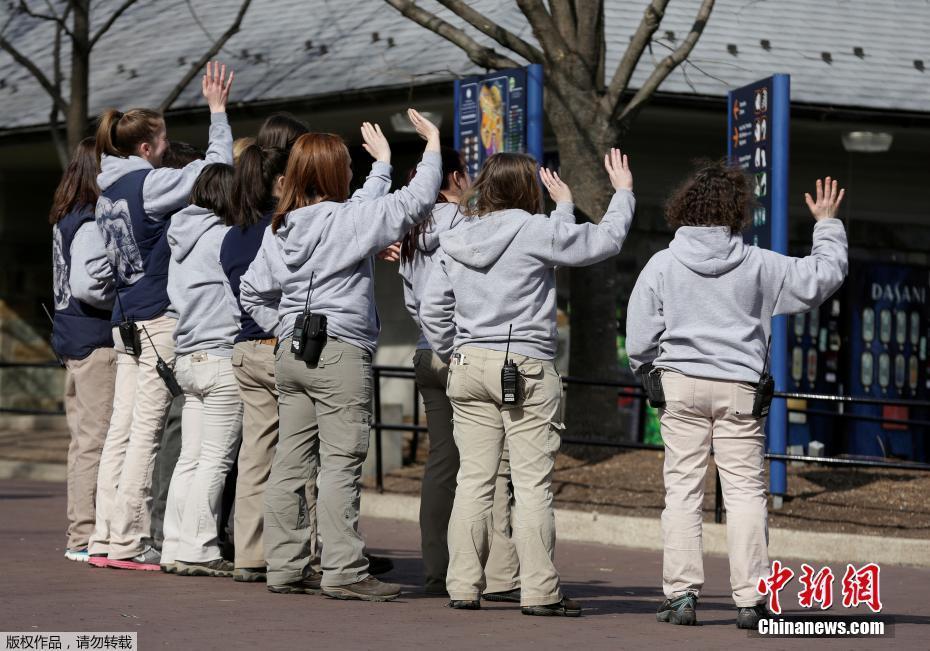 """当地时间2017年2月21日,美国华盛顿,3岁的旅美大熊猫""""宝宝""""离开华盛顿国家动物园,它当日起程返回中国。图为动物园的饲养员们依依不舍的与""""宝宝""""挥别。"""