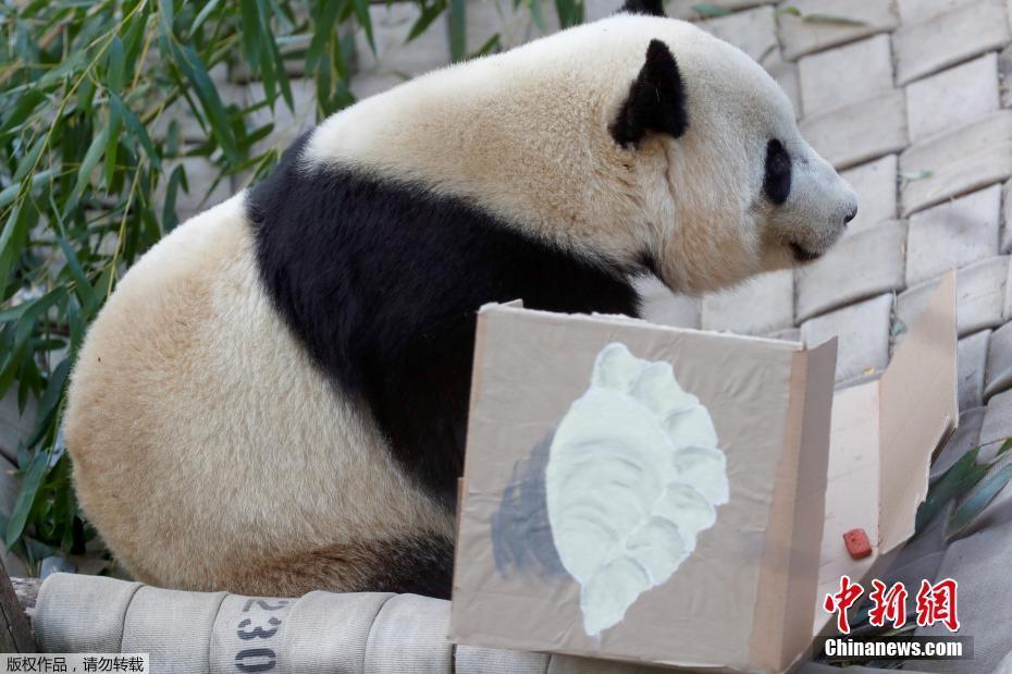 """雌性大熊猫""""宝宝""""2013年8月23日出生于华盛顿国家动物园,它的父母是旅美大熊猫""""添添""""和""""美香""""。图为当地时间2月16日,""""宝宝""""在华盛顿国家动物园为其举办的告别活动中。"""