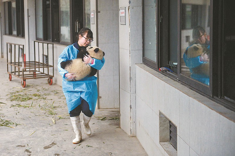 段东琼抱着一只大熊猫宝宝,眼里满满都是爱。