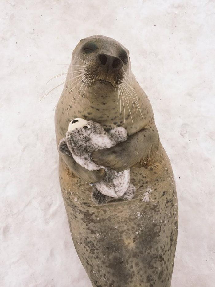 Japon: Un phoque découvre une peluche de lui-même