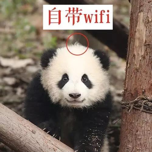 """腿短体方""""奇一"""":自带wifi,爱抱大腿的网红届冲锋车"""