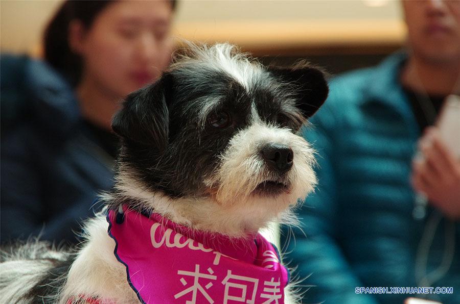 Los perros esperando a encontrar un dulce hogar. A pesar de sus experiencias mayormente tristes, ellos siguen confiados en los seres humanos después de ser rescatados de los criminales o de la calle. (foto: El Día de la Adopción de Beijing)