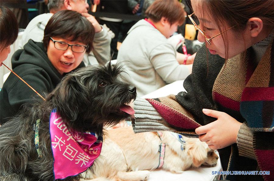"""Los perros se visten de una bufanda adorable que dicen """"Buscando a un Sugar Daddy"""". (foto: El Día de la Adopción de Beijing)"""