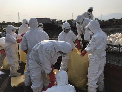 宜兰县三星乡又有一处樱桃鸭场传出禽流感H5N2确诊,今早扑杀约5000只肉鸭。
