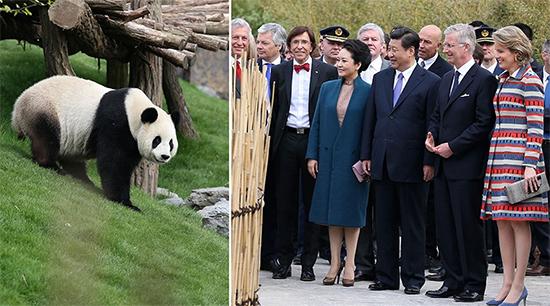 习近平和夫人彭丽媛同菲利普国王夫妇、比利时首相迪吕波等参观大熊猫园(拼版照片)