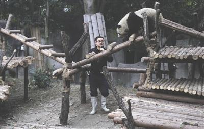 张粤用口哨对熊猫进行行为训练