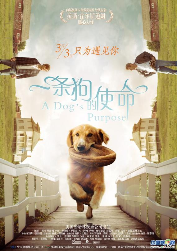 """《一条狗的使命》曝 """"使命版""""特辑 吸引情侣档助力票房"""