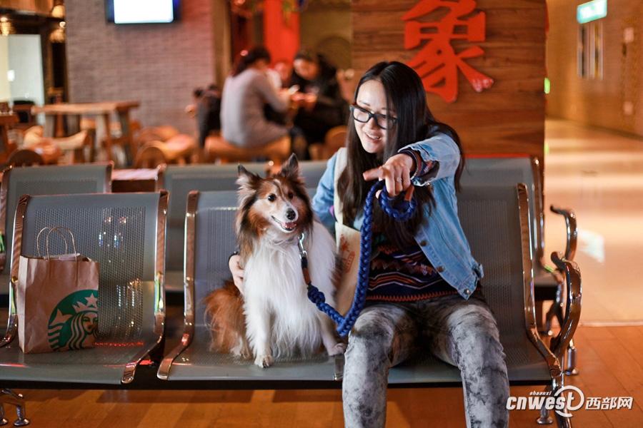 Xi'an : 50 chiens et leurs maîtres partagent ensemble un joyeux moment tendre
