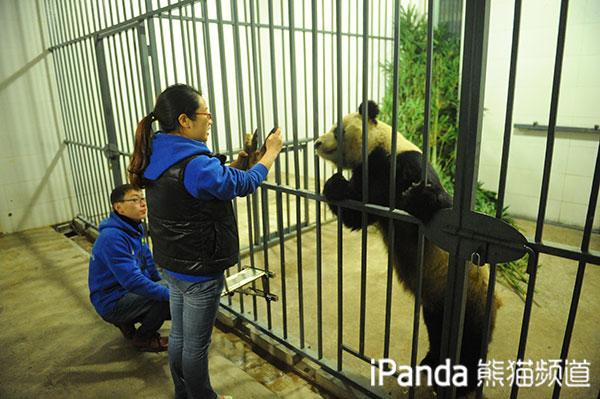 """大熊猫""""蜀兰""""和饲养员刘娟友爱互动"""
