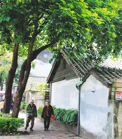 台北民生东路上的老人、老屋、老树。