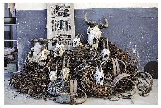 九顶山野生动植物之友协会门前,堆放着从山上拆下的钢丝猎套及遭猎捕的野生动物头骨。这些猎套只是巡山队员近十年拆卸的9万个猎套中的一小部分。