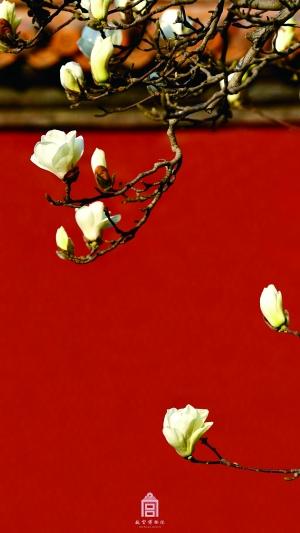 Photos : les couleurs du printemps dans la Cité interdite