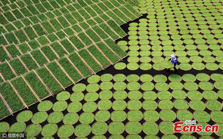 Airing Tea Leaves by Lu Fanjing, 3rd Place, China National Award, 2017 Sony World Photography Awards. The National Awards is a global program to find the best single photographs taken by local photographers in 66 countries. (Photo/CFP)