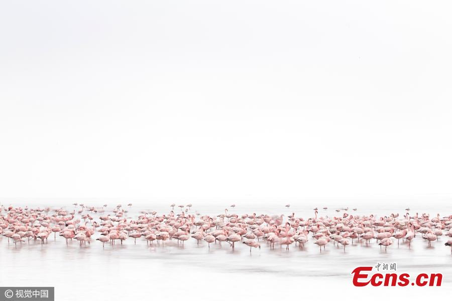 """Wildlife winner: Flamingo Soul by Alessandra Meniconzi, Switzerland. """"I am not a wildlife photographer but when I saw the flamingos on the shallow waters of Walvis Bay for the first time I really went crazy. I watched them from early morning till the end of the day. """"(Photo/CFP)"""