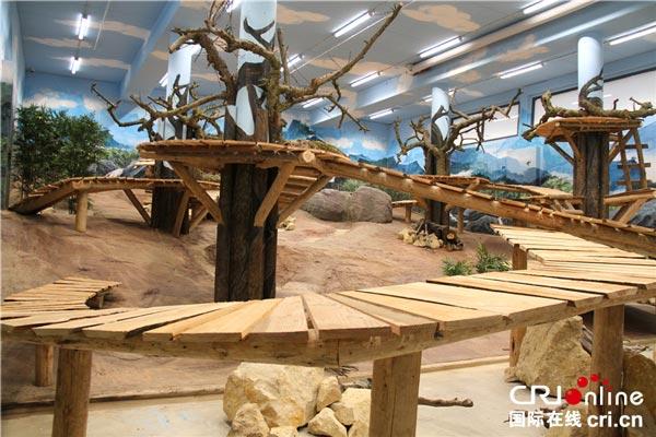 大熊猫室内活动区域