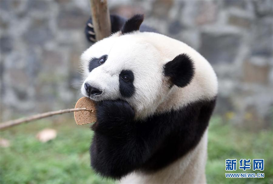 On Tuesday afternoon, two pandas named Xingya and Wuwen left from Sichuan Province to The Netherlands.