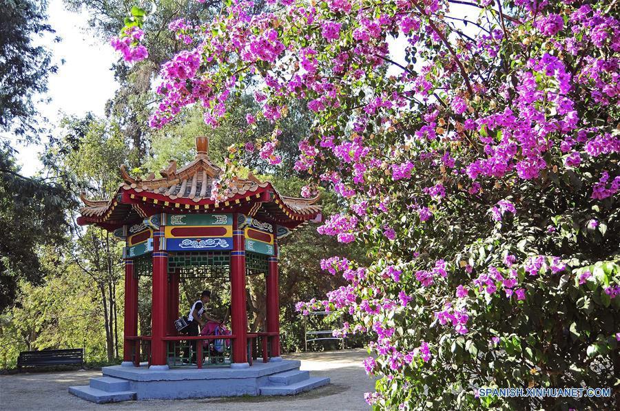 Chile jard n chino en santiago espa ol for Chino el jardin