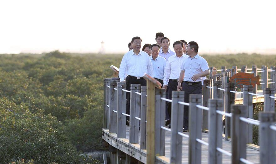 President Xi Jinping visits the Golden Gulf Mangrove Ecological Protection Zone in Beihai, South China