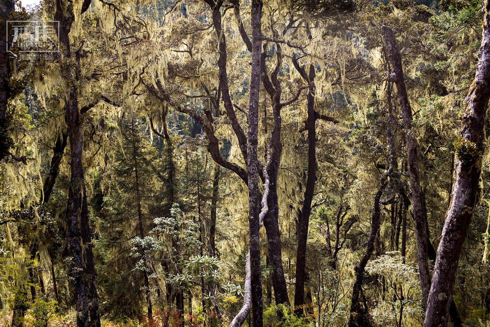 Yunnan : de la déforestation à la protection écologique