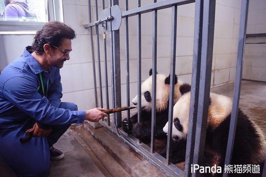阿米尔·汗近距离喂食大熊猫