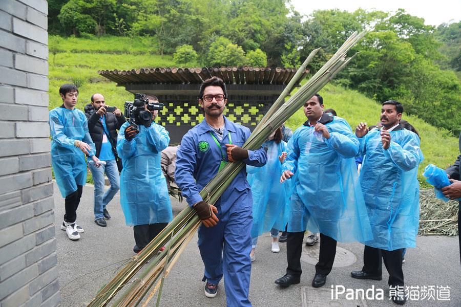 印度国宝级演员阿米尔•汗化身育保员为大熊猫搬竹子