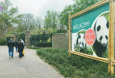 当地时间4月12日,荷兰雷嫩,民众经过欢迎中国大熊猫到来的指示牌。