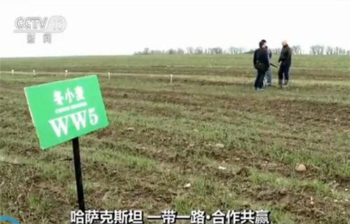 中哈农业创新园