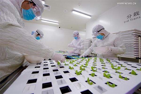 أهم الموضوعات /الصين (مقالة خاصة): معامل الزراعة يفتح آفاقا مستقبلية للعلماء الصينيين